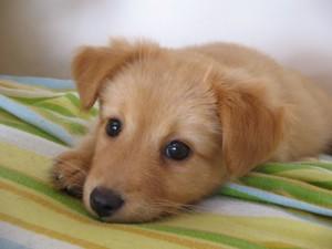 criterios para decidir si regalar una mascota